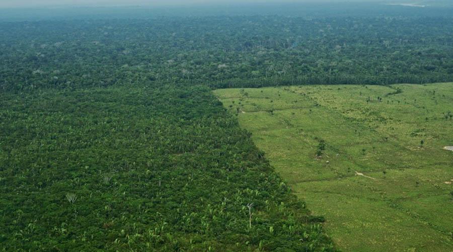 Brésil : opération coup de poing contre la déforestation