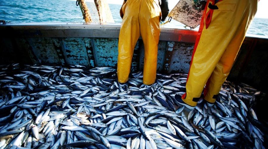 La surpêche menace les océans