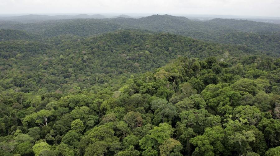 Montagne d'or Guyane