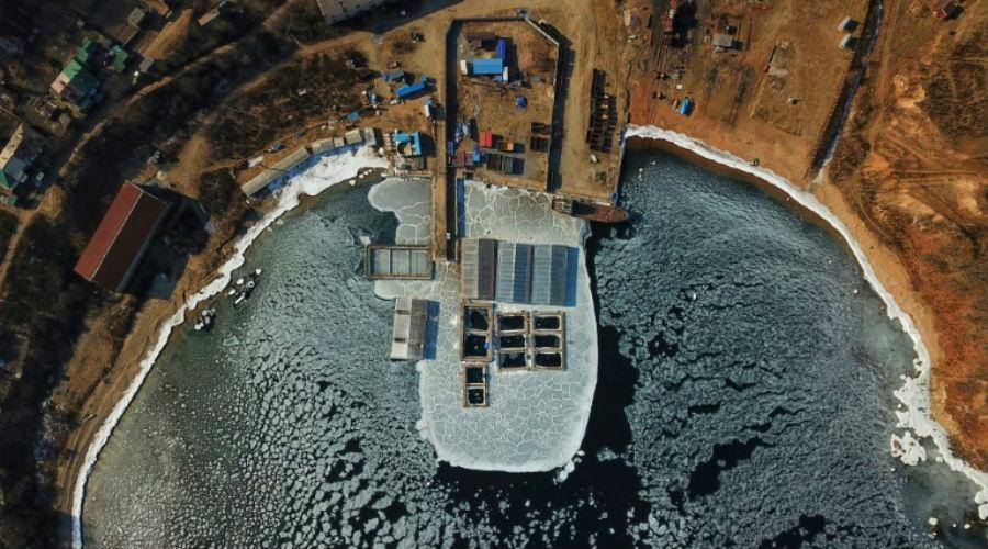 Russie : des orques relâchées dans un nouvel habitat malgré les risques