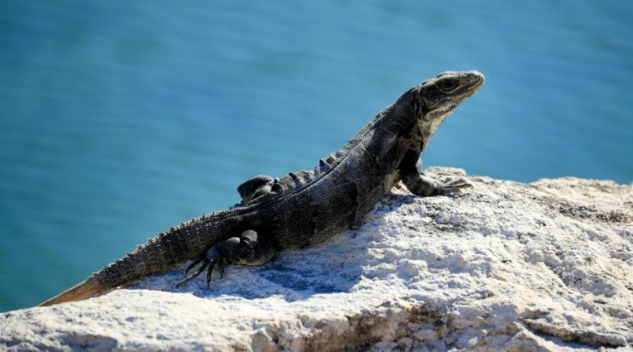 Europol : sauvetage de milliers de reptiles destinés à finir en sac à main
