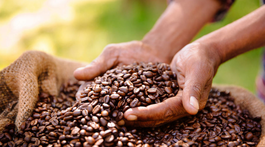 Le café, traitement efficace contre une maladie orpheline