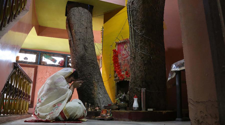 Inde : une maison familiale construite autour d'un arbre centenaire