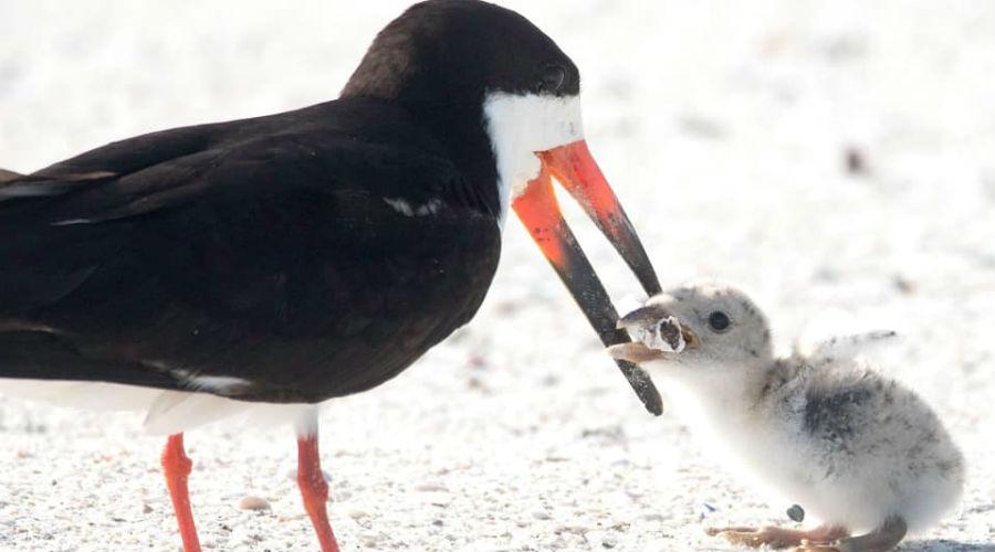 Les images affligeantes d'un oiseau nourrissant sa progéniture inquiètent la toile