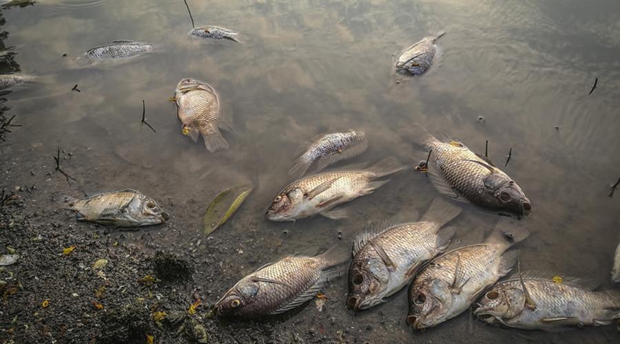Yvelines : des tonnes de poissons morts dans la Seine après l'incendie d'une unité d'une station d'épuration