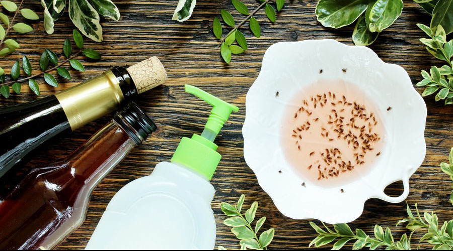 Quelles solutions naturelles contre les moucherons ?