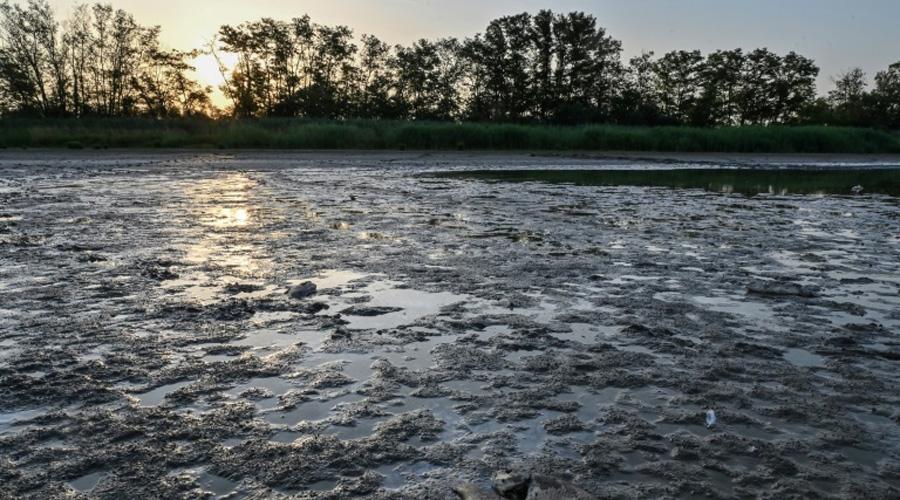 Canicule : les poissons des étangs de la Dombes étouffent