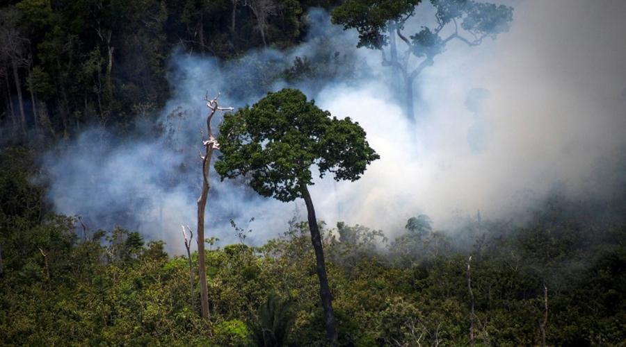 amazonie incendies