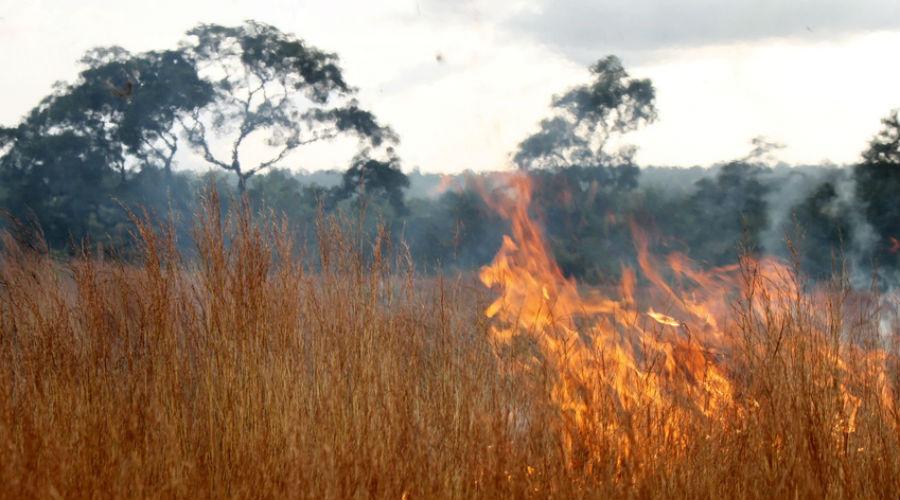 Pire qu'en Amazonie, des incendies dévastent les forêts d'Afrique