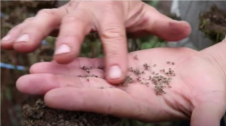 Et si vous pouviez créer vos semences vous-mêmes ?
