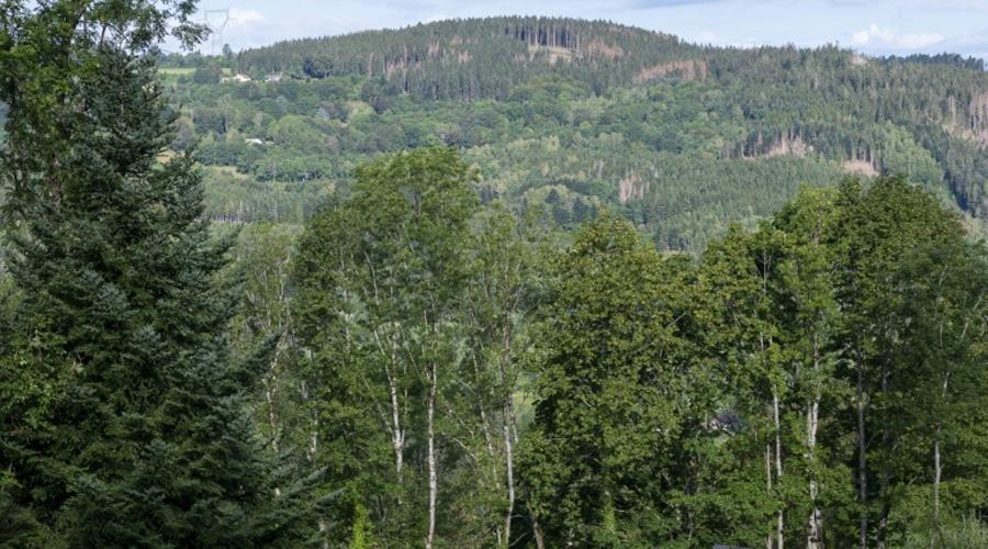 Réchauffement: un rapport préconise de planter un arbre par habitant pendant 30 ans pour adapter la forêt