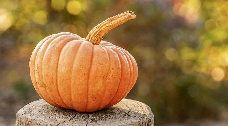Halloween 10 Idees De Deco Naturelle Reperees Sur Pinterest Bio A La Une