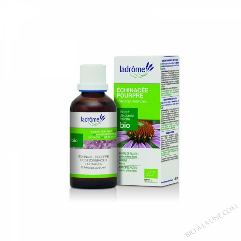 echinacée - 50 ml