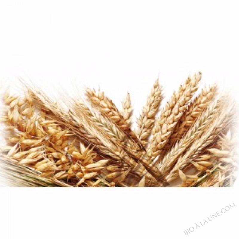 BIOFERMENT Vrac Petit épeautre / Seigle germés et lacto fermentés - SAC 20 kg